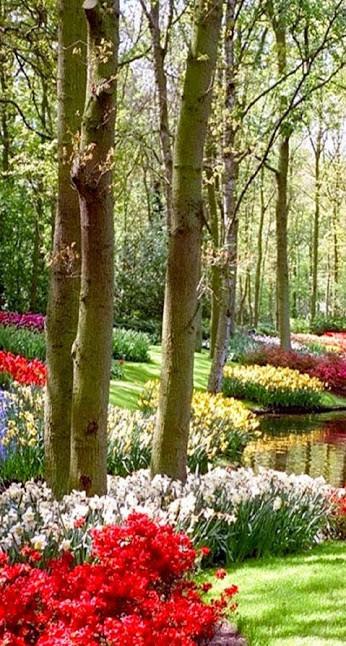 Beau jardin for Beaux arbres de jardin